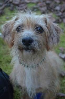 Jack Russell Terrier Katie Medium Adult Female