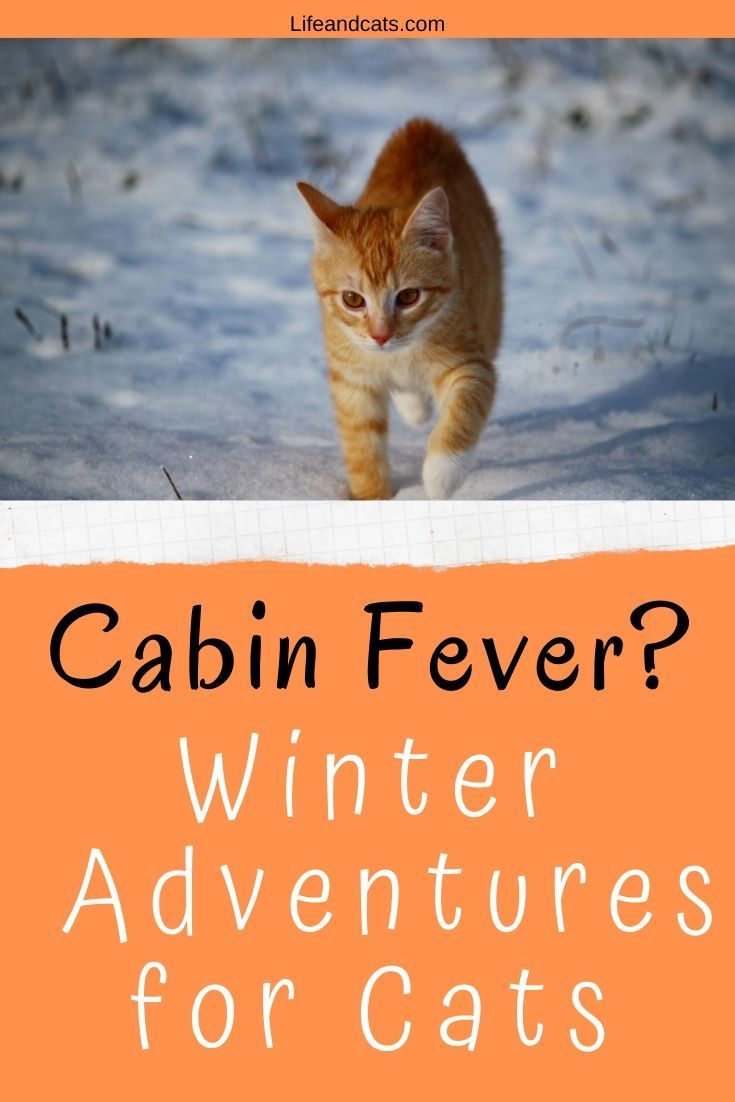 Photo of Give Your Cat an Awesome Winter Adventure – Life & Cats