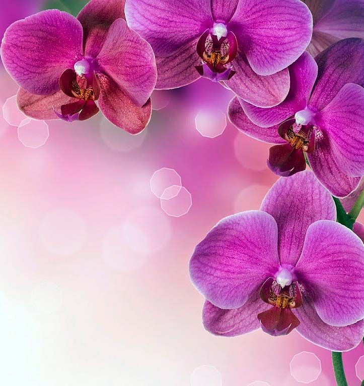 Pin By Nona Nasr On Nona Orchid Wallpaper Flower Background Wallpaper Flower Background Images