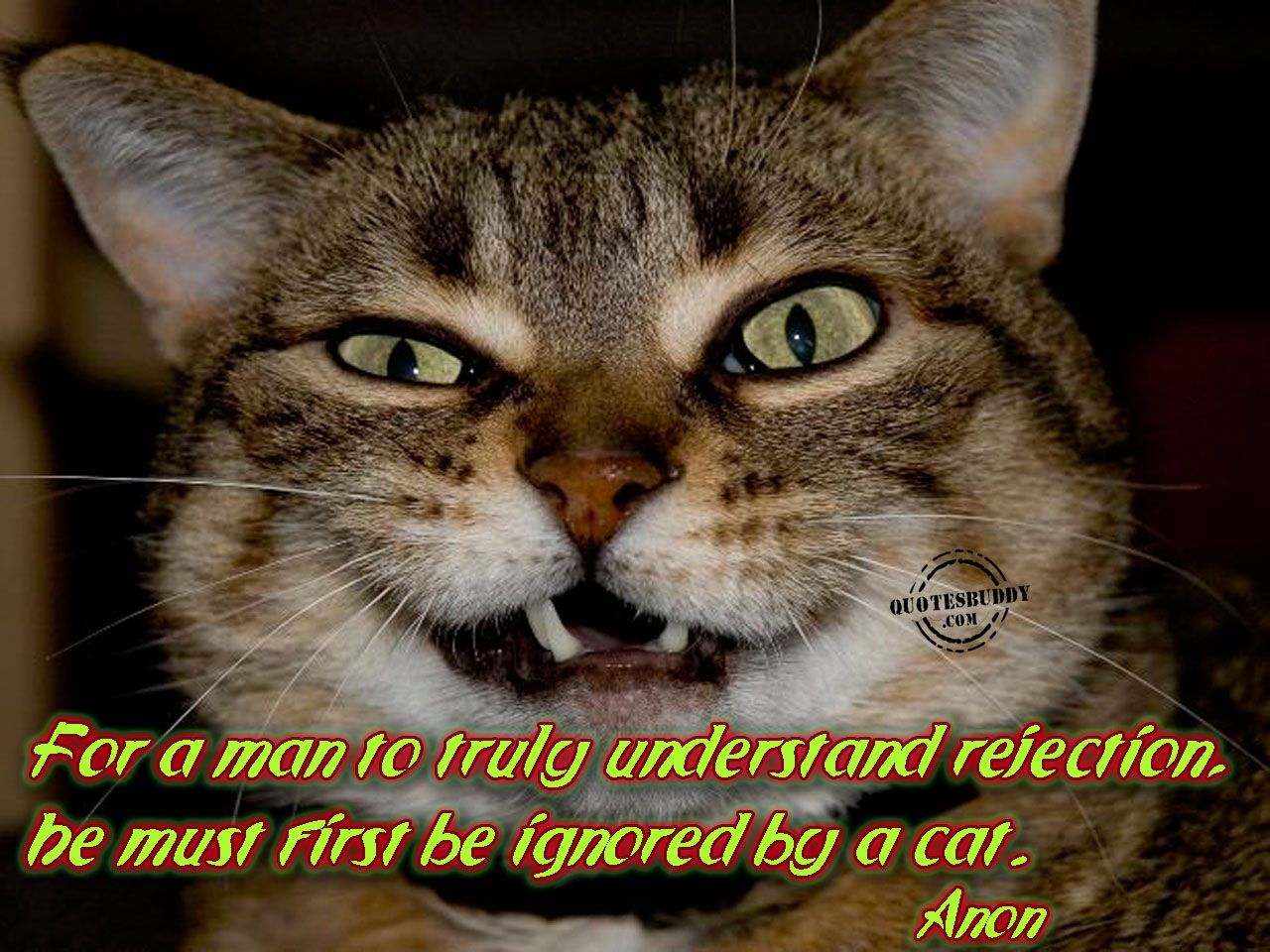 cute cat pictures with sayings funny cat pictures with quotes