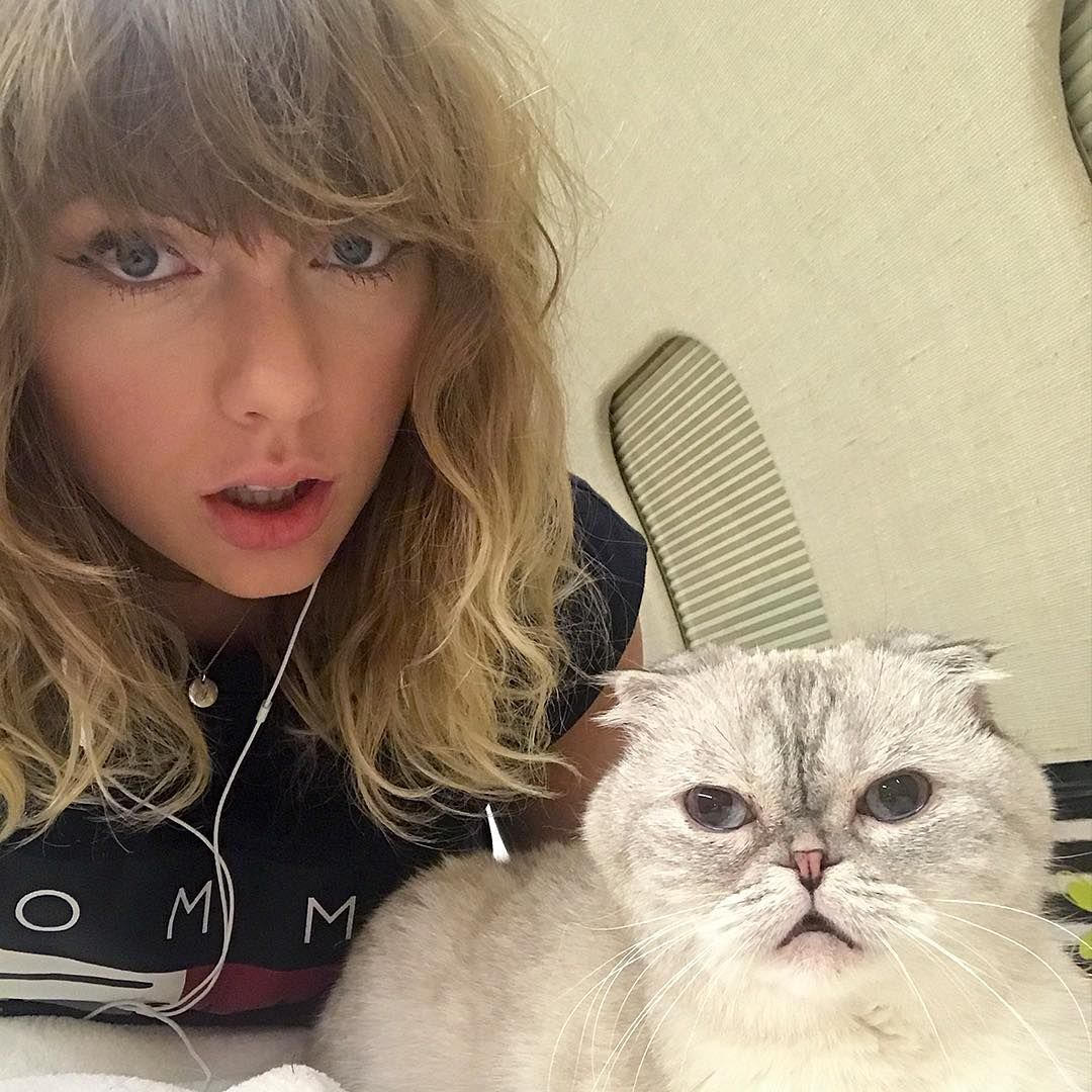Whats Taylor Swift Doing In the Lead Up to Reputations Release? Hanging with Her Cats, Of Course
