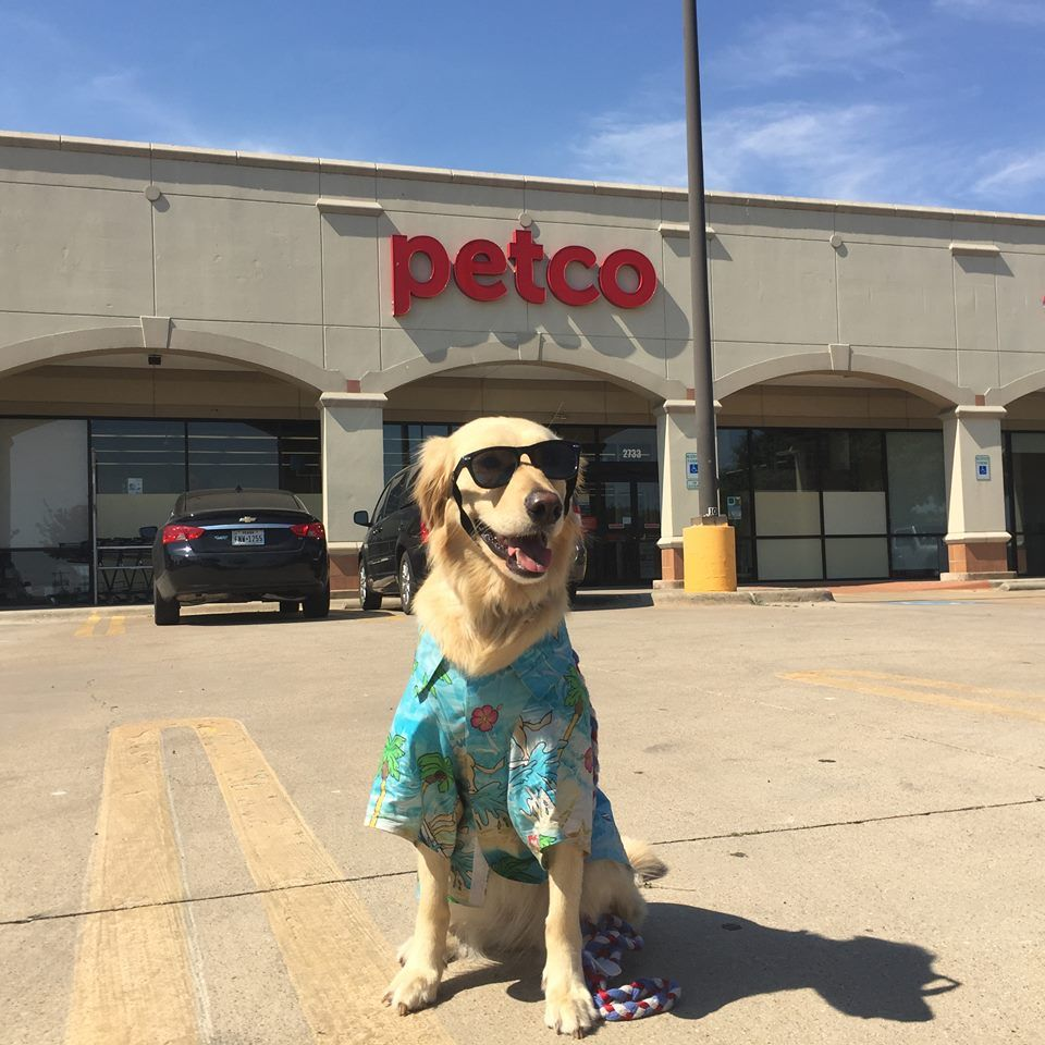 """Thanks Petco for carrying Lucy Pet Products!"" Jack"