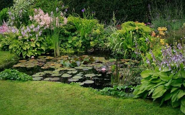 The ultimate water feature guide gardens a natural and for Koi pond plant ideas