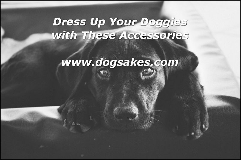 Interactive Dog Toys Dog Accessories - Dog Sakes
