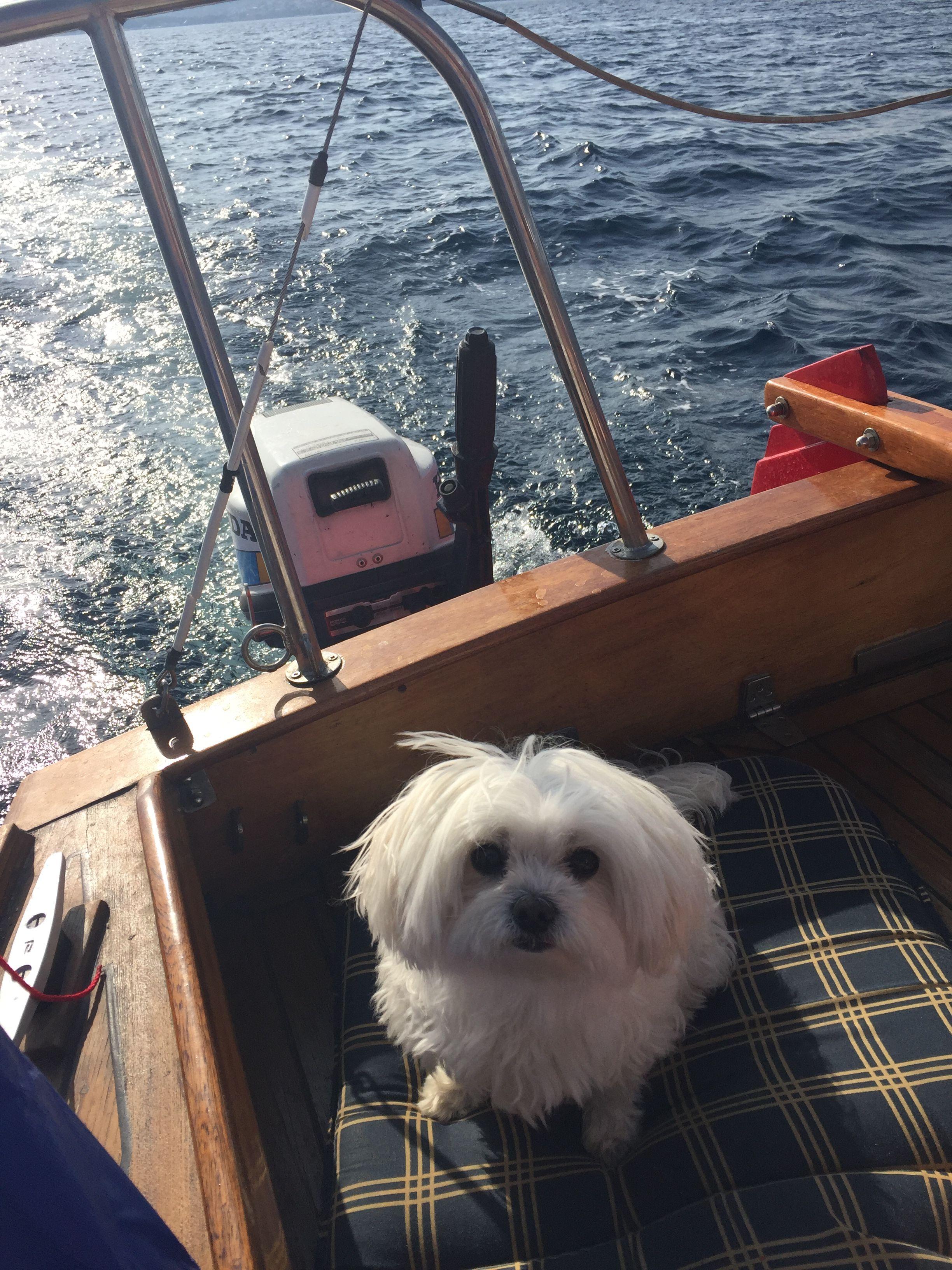 Emmi Malteser Pawshake Hunde Emmi Und Malteser