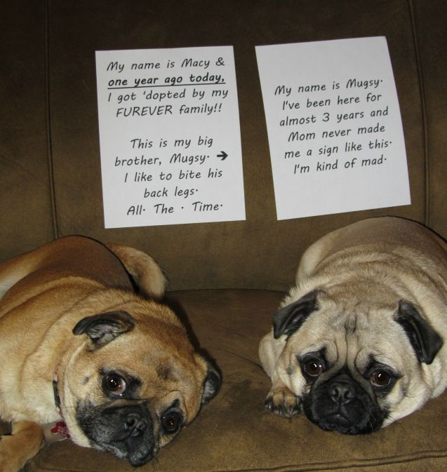 Dog Shaming - Macy & Mugsy