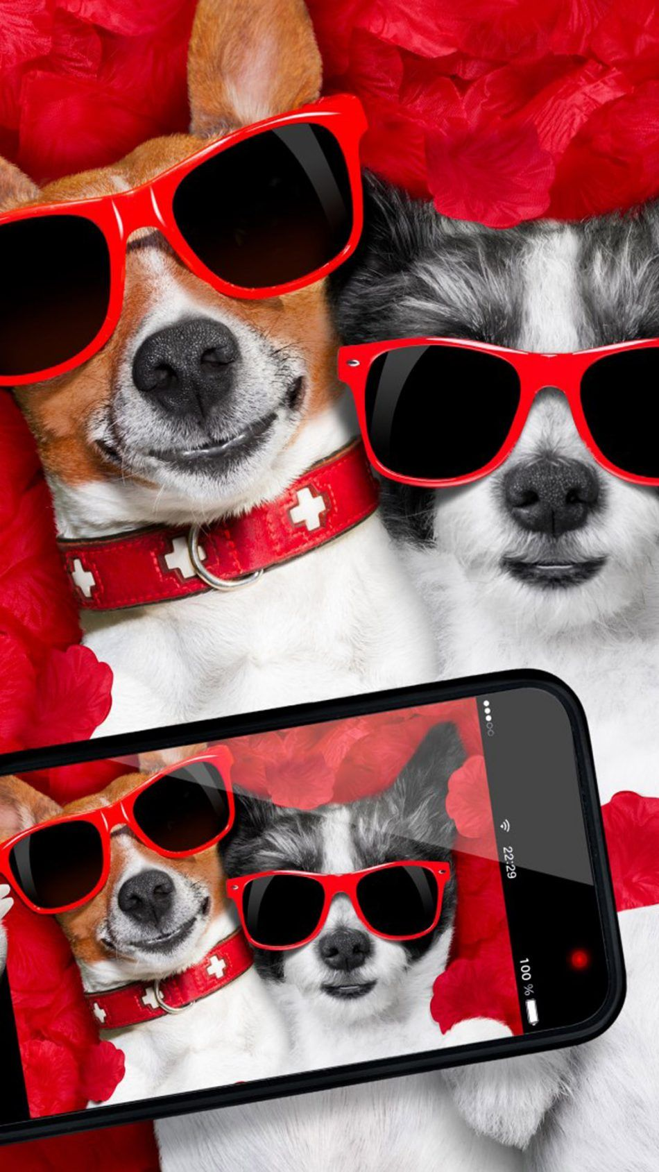 Funny Dogs Taking Selfie Funny dogs, Funny animals