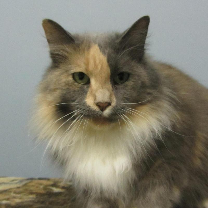 Adopt Amelia on Animals, Animal shelter, Humane society