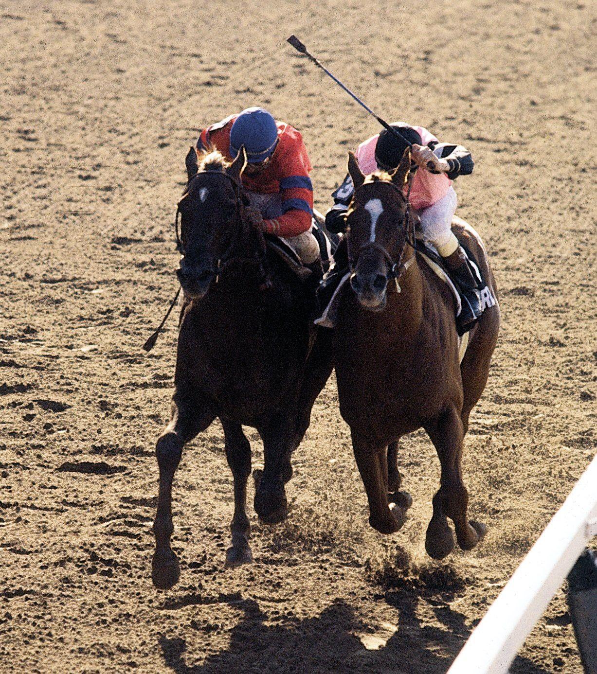 bfb4245a7be Affirmed Alydar ♡♡ Horse Racing