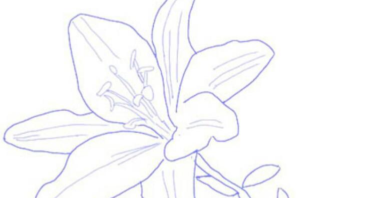 Wow 11 Gambar Sketsa Bunga Bougenville Sketsa Gambar Bunga Kertas Gambar Bunga Gambar Bunga Bougenville Sigambar Baru Gambar Bung Di 2020 Bunga Gambar Bunga Kertas