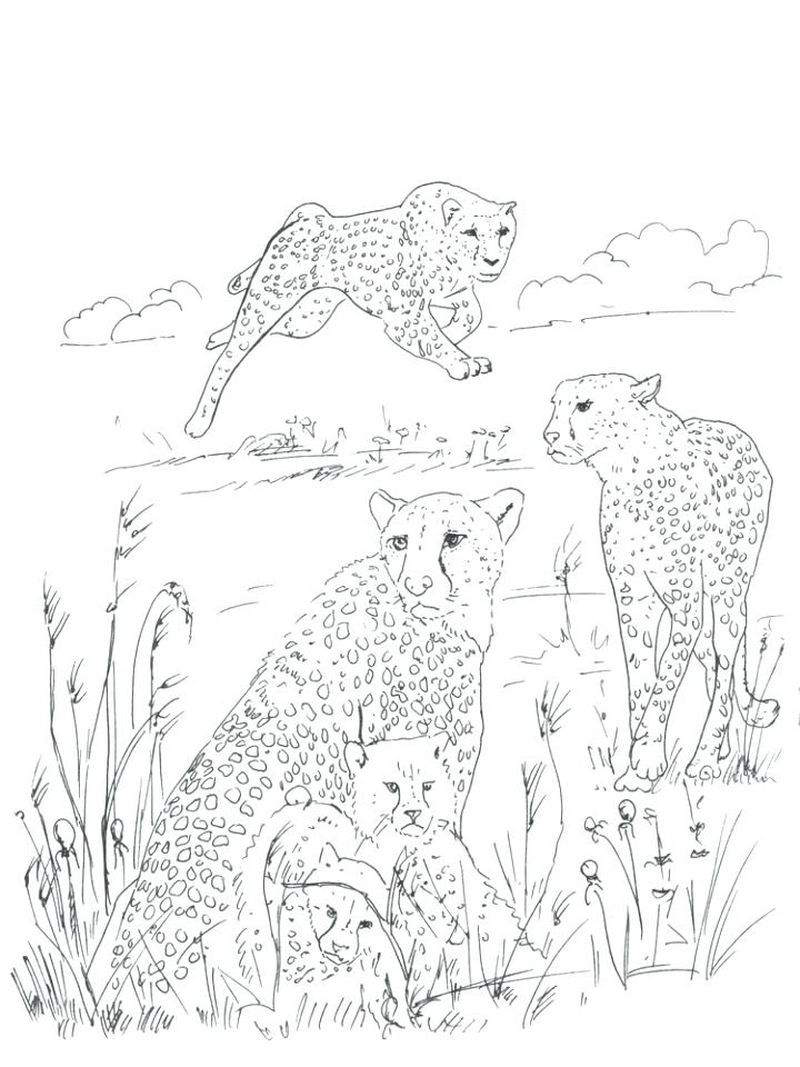 Pin On Wild Animals Coloring Sheets
