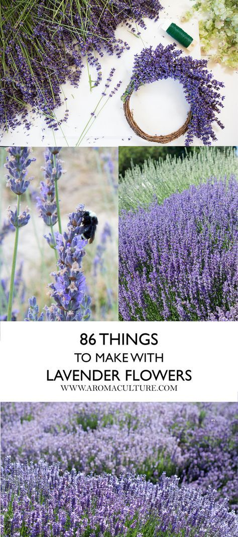 86 Ways to Use Lavender — Aroma Culture