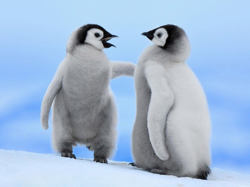 Detail For Cute Baby Penguins Wallpaper HD