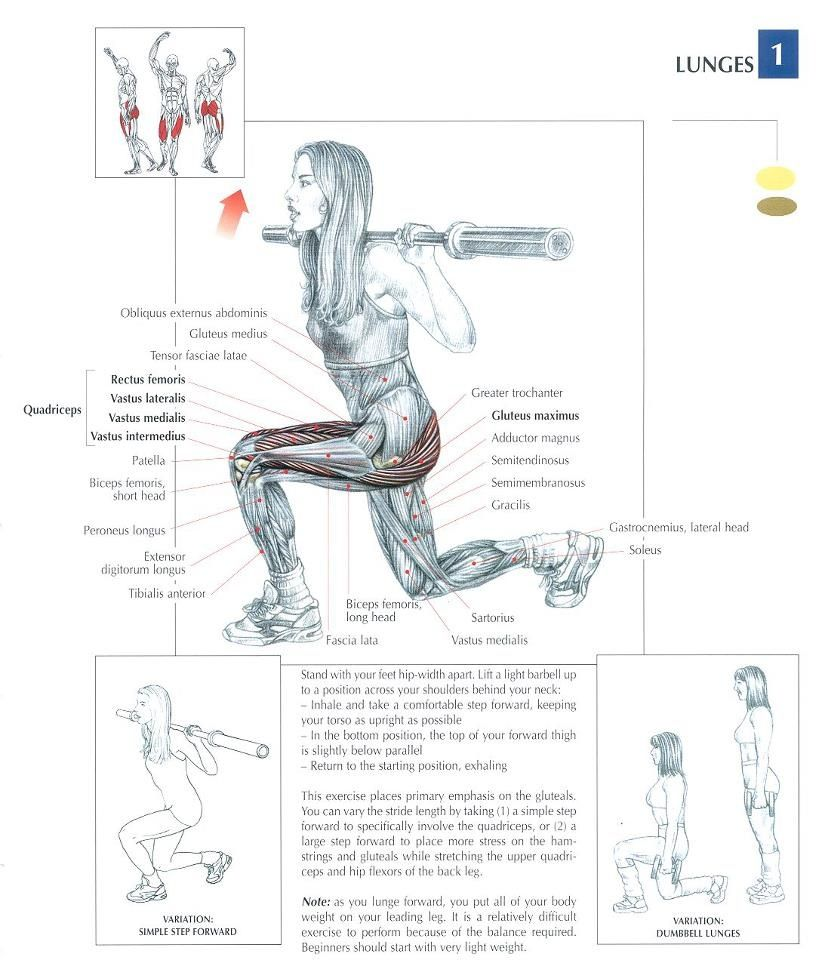 gotta work them glutes   Workouts   Pinterest   Lunges, Glutes and ...
