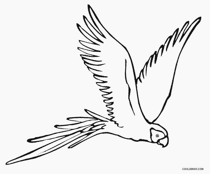Parrot Coloring Pages Zeichnen Kunst Motive
