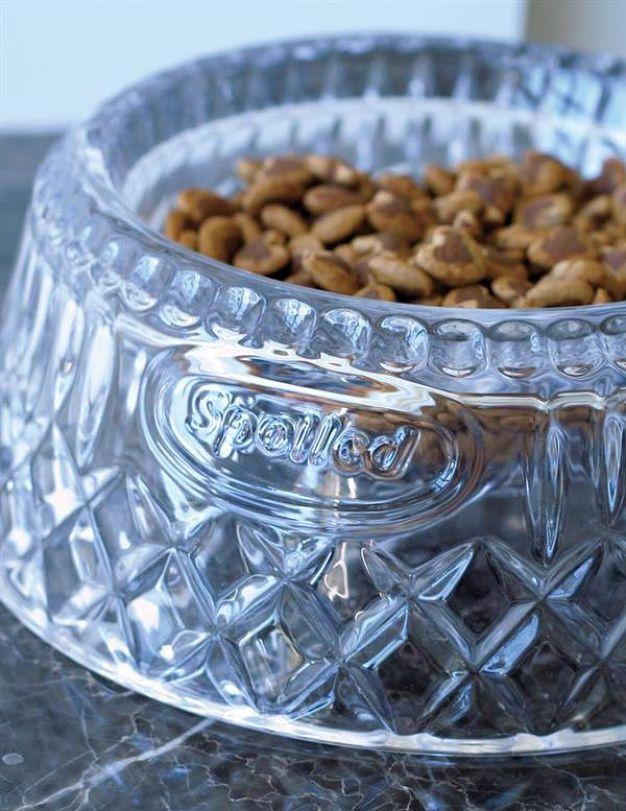 Pampered Pet Bowl Pamper Pets Pet Bowls Dog Food Bowls