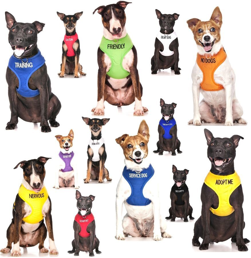 Details About Warning Dog Colour Coded Collar Lead Leash Harness