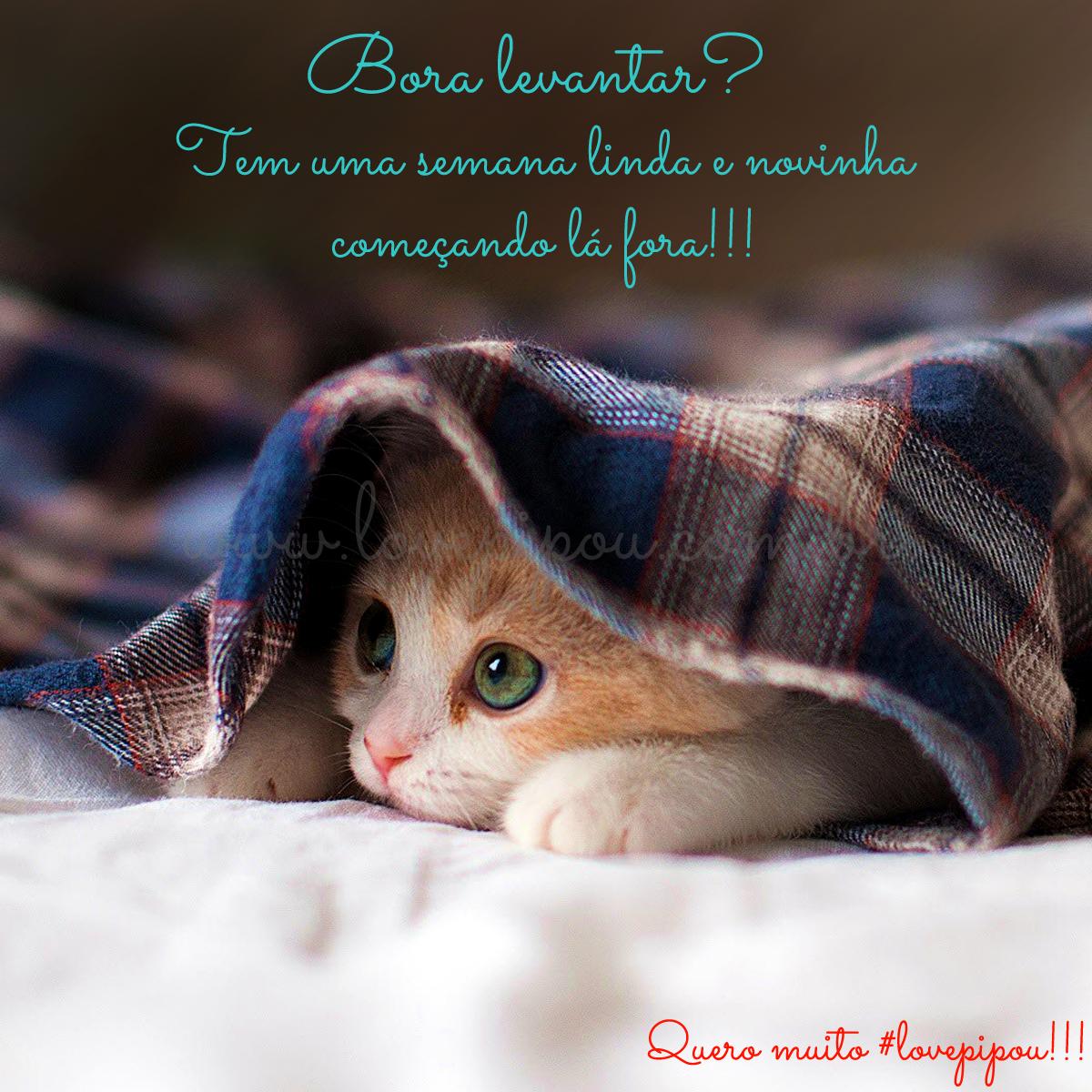❤ Bom dia!!! ❤