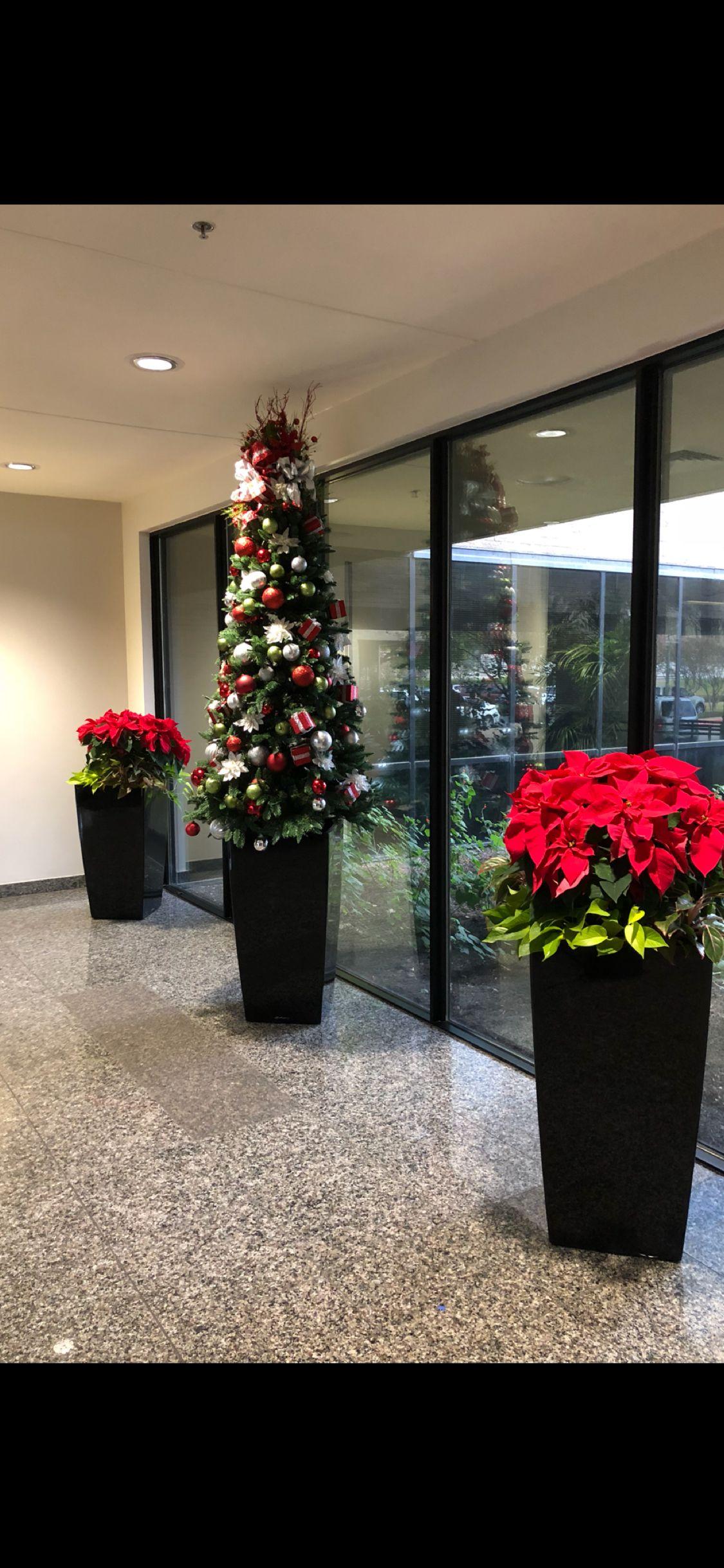 POINSETTIAPOINSETTIAS & LIVE CHRISTMAS TREE Holiday