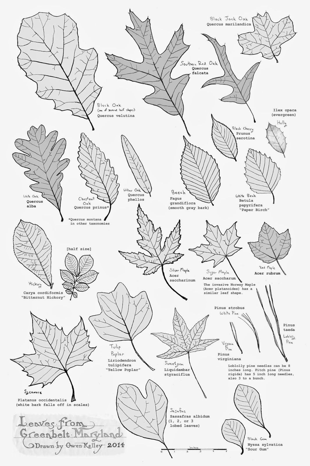 Leaves Of Greenbelt Poster Updated With Images