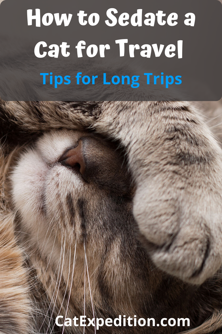 How to Sedate a Cat for Travel Cat travel, Cat