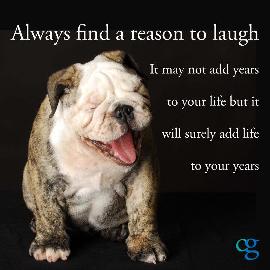 Bulldog Quotes Where Have You Found Humor In The Everyday Struggles  Up Lifting