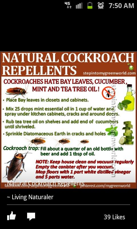 Natural Alternative To Raid Spray And Combat Baits Cockroach Repellent Tea Tree Oil Pest Control