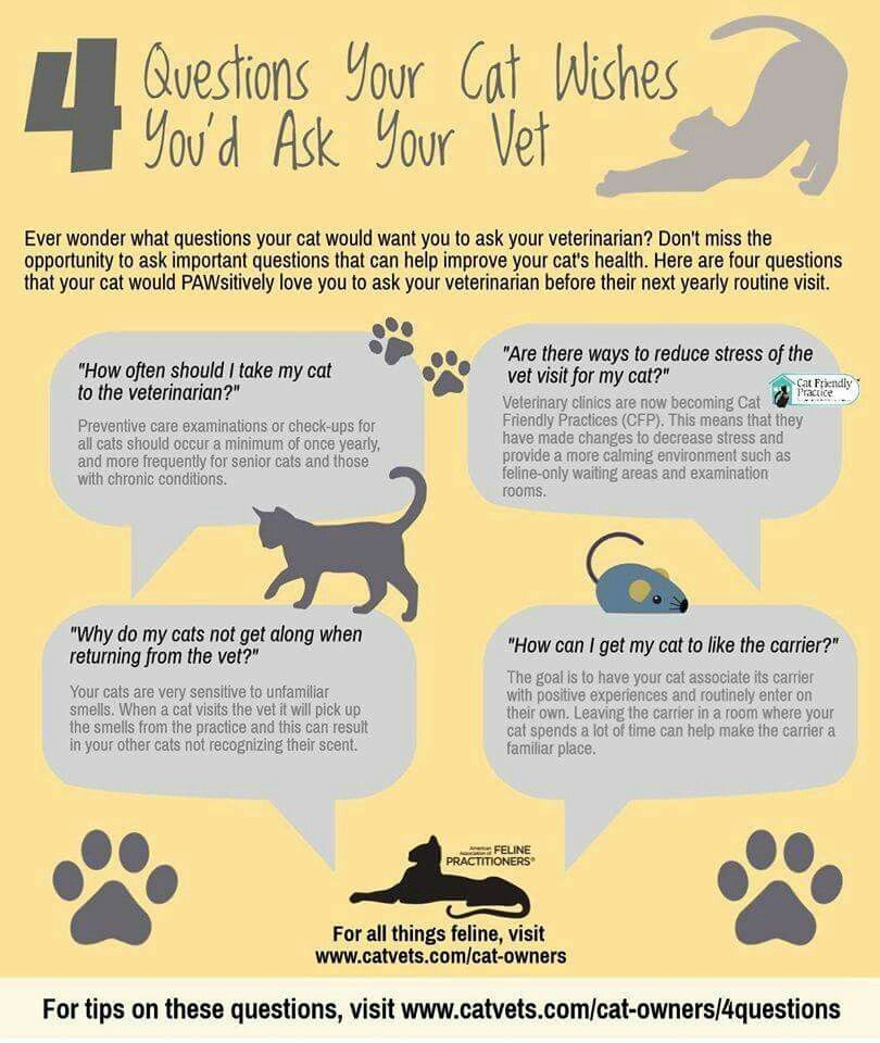 Veterinarian cat health