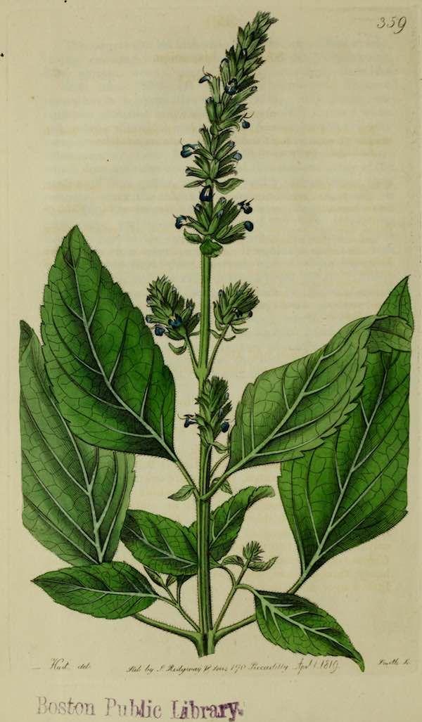 Semillas de chía, propiedades mágicas y recetas con chía , Propiedades de las semillas de chía. Qué es la chía. Cómo tomar chía. Recetas con chía. Beneficios de las semillas de chía.