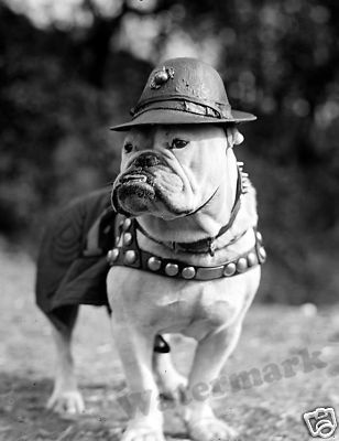 Photograph Vintage Image 1925 Mascot Military Working Dogs