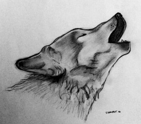 dessin loup noir et blanc dessin pinterest dessin. Black Bedroom Furniture Sets. Home Design Ideas