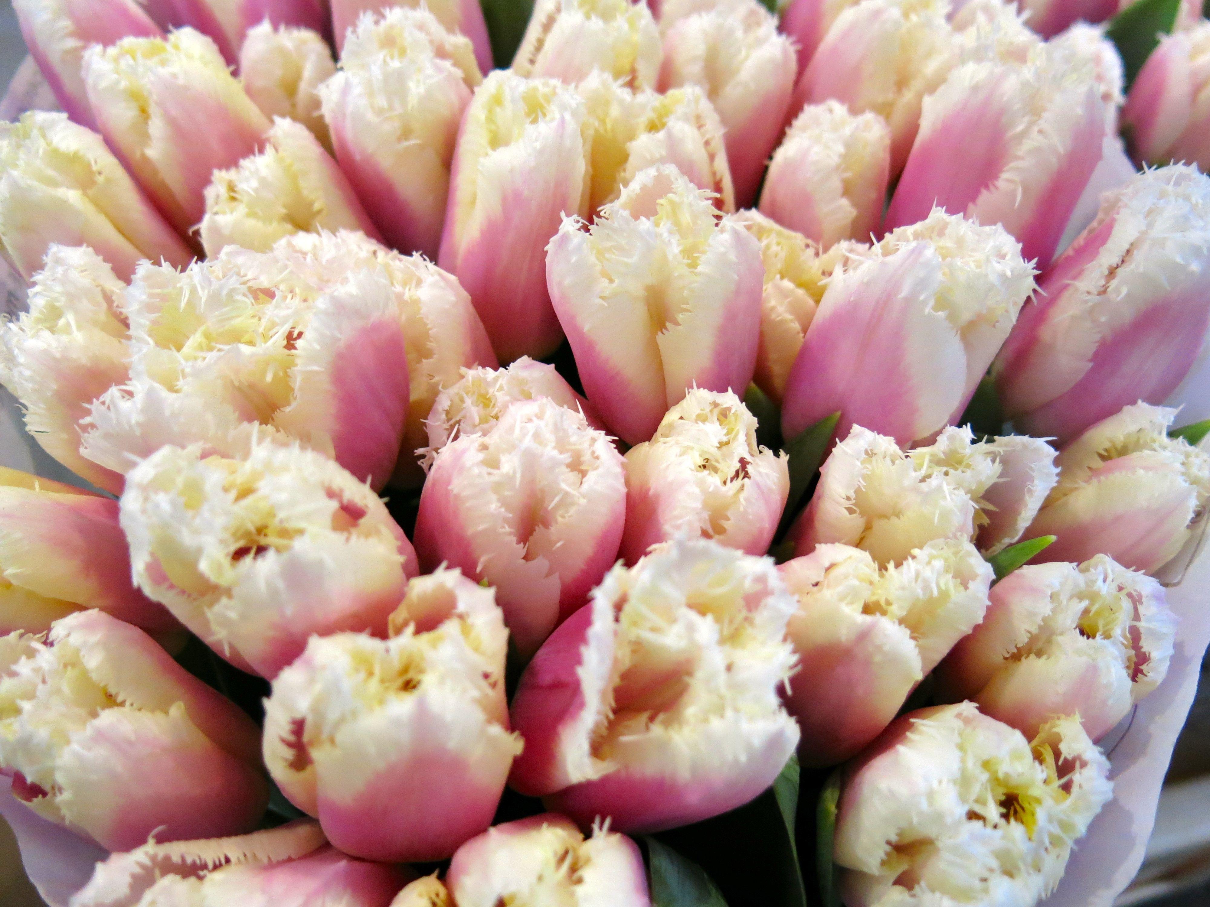 Tulips In Flower Market