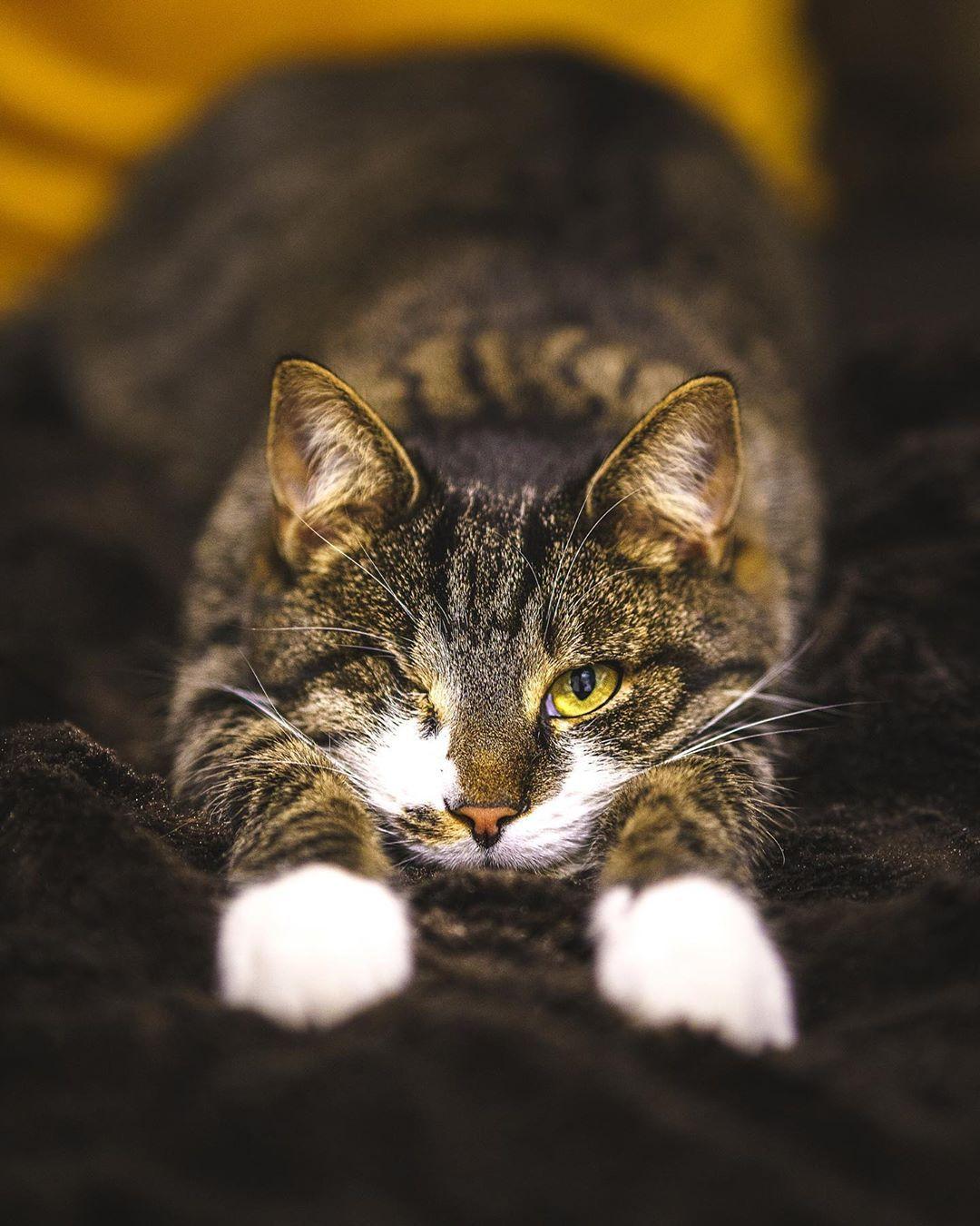 Im tired . . . . . . #cat #catsofinstagram #cats #catstagram #cats_of_world #cats_of_instagram #catsanddogs #catlover #catholic #catering #catlovers #catlovers #catlife #catsagram #fluffycat #catslife #oneryedcat #oneeyedcatsclub #oneeyedcat #miau Instagram BridgeIm tired...