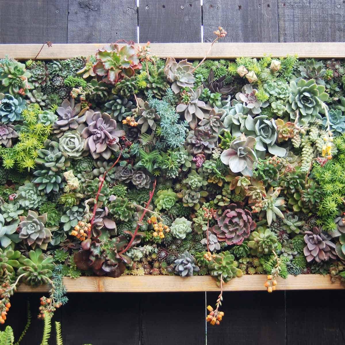 how to make a flower wall garden