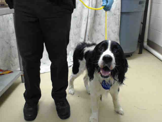 Houston This Dog Id A414489 I Am A Male Black And White