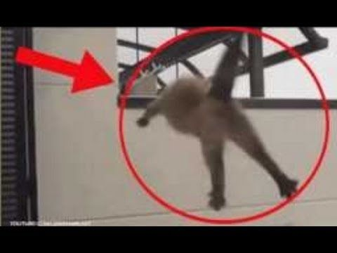 TOP 5 Cats Suicide / Cats Jump Fail Kitty