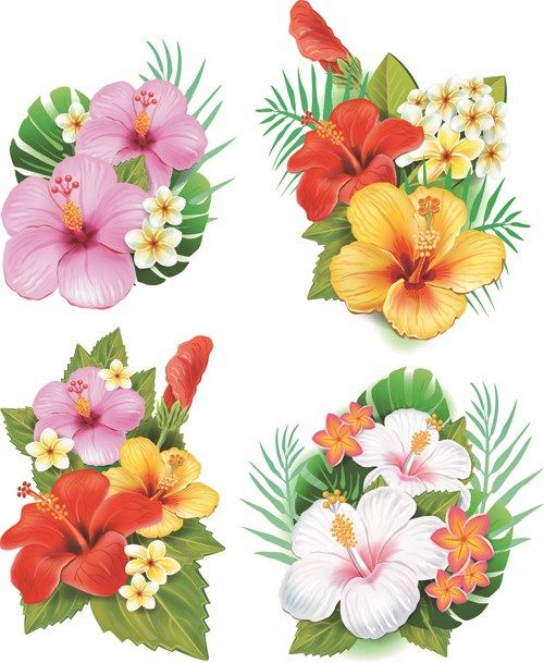 Vector Hibiscus And Beautiful Flowers Hibiscus Beautiful Flowers Cartoon Hibiscus Png And Vector Vector Flowers Flower Illustration Flower Clipart