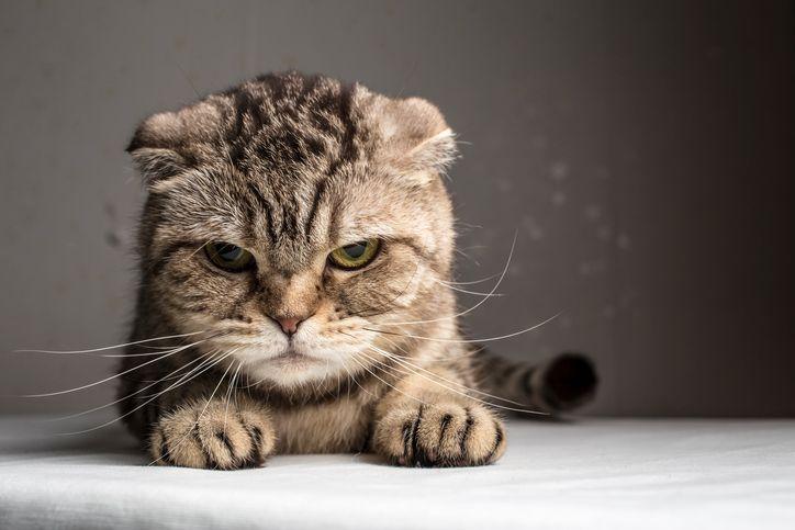 Comment cr er un r pulsif naturel et non dangereux pour les chats flower animals pets - Repulsif chat jardin naturel ...