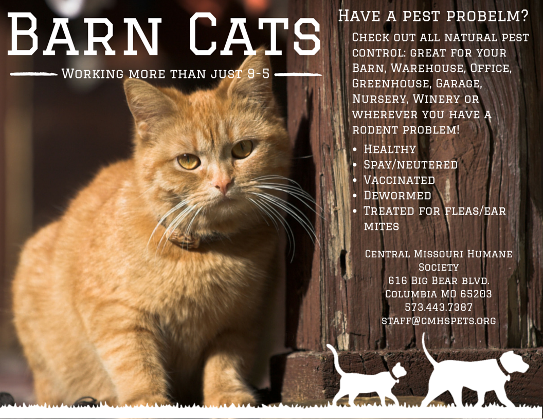 Pin By The Barn Cat Lady On Barn Cat Promos Animal Rescue Ideas Feral Cats Cats
