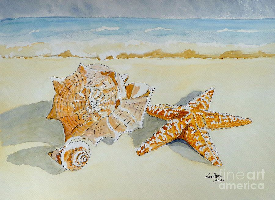 Sea Shells Canvas Print Art By Eva Ason