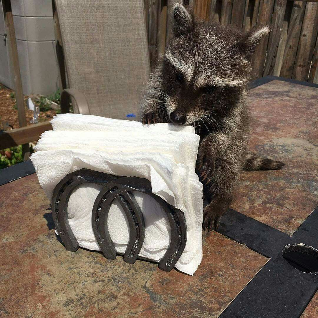 Rustic horseshoe napkin holder. Racoon.