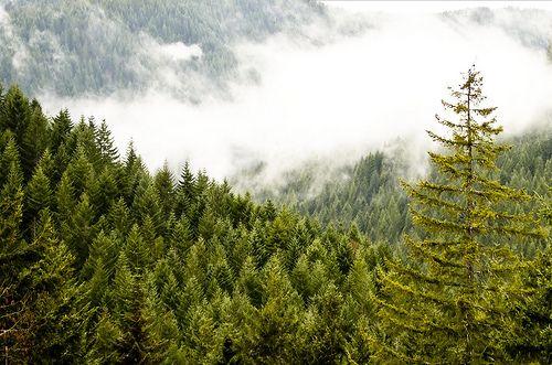 Gales Creek Overlook- Idiotville, Oregon