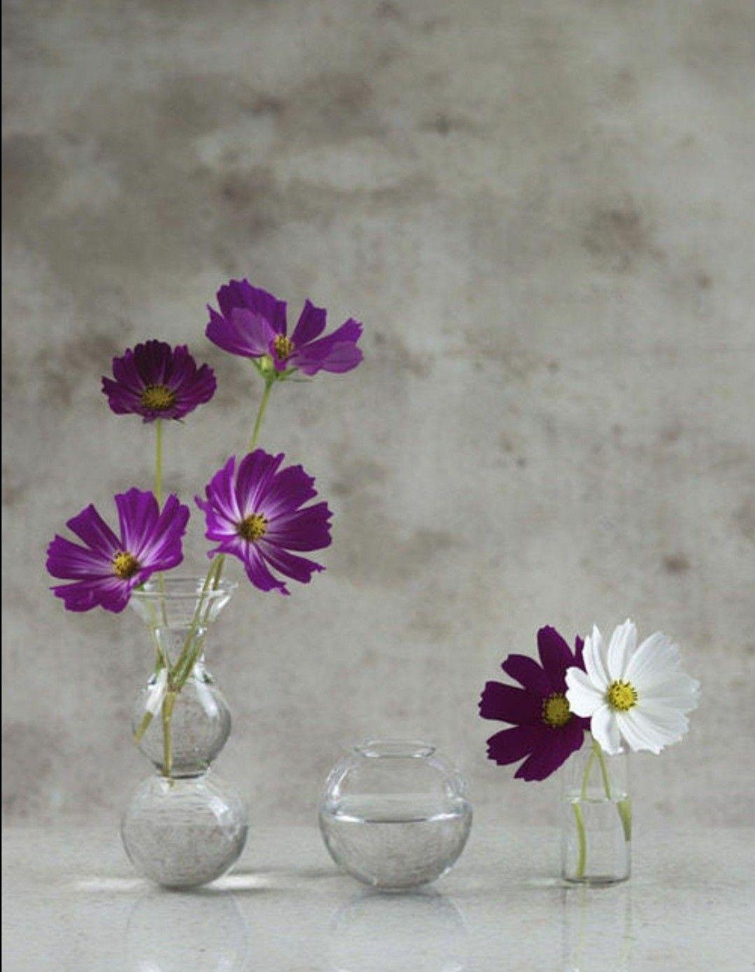Pin By Estela Borke On Still Life Violet Flower Flowers Cosmos