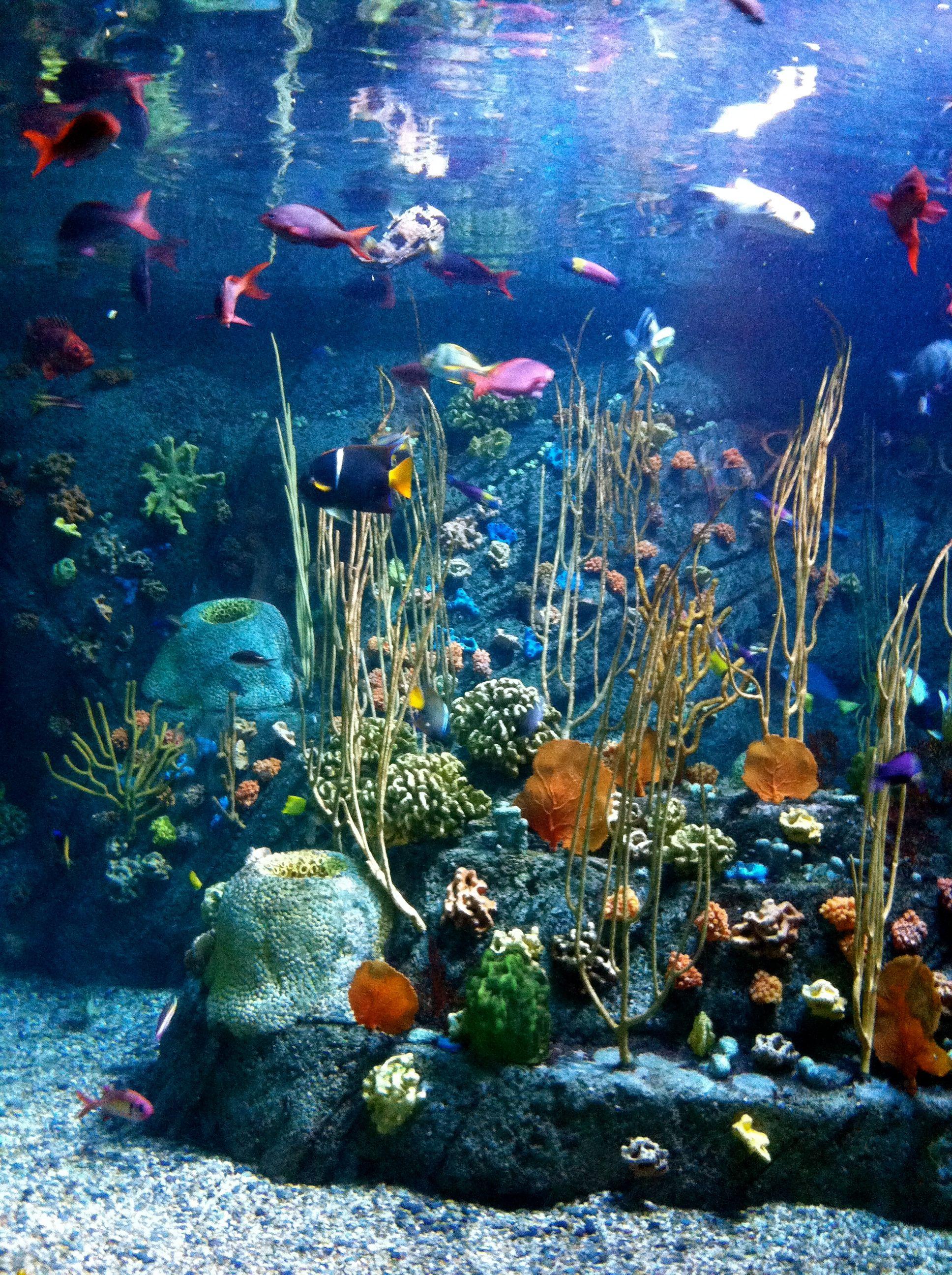 Luxe De Aquarium Mural Des Idées Idées de table