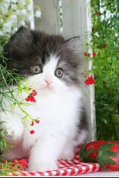 Image may contain cat Кошачье настроение. Кот