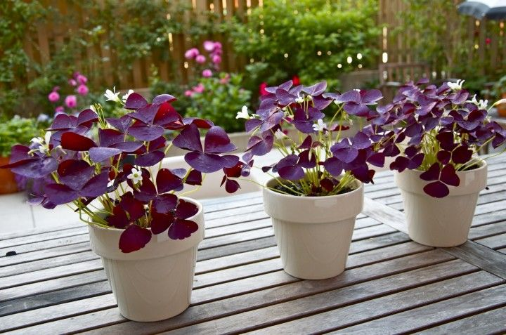 Little Brown Pen Plants In Jars Shade Loving Flowers White Flower Pot