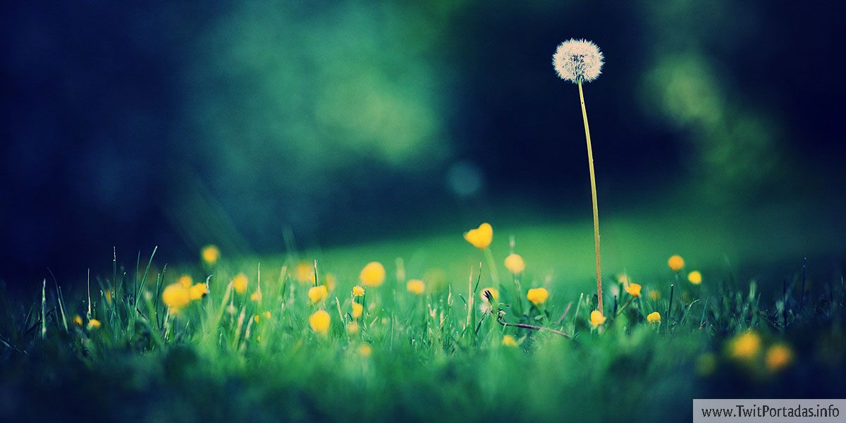 Pin By Petyy Flores On Belleza Dandelion Wallpaper Dandelion Dandelion Flower