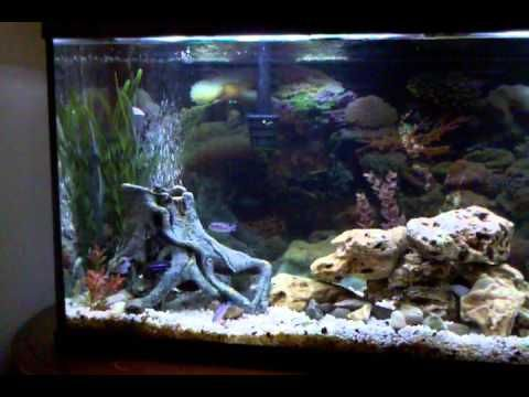 55 gallon fish tank driftwood and river rock scaping fish tank