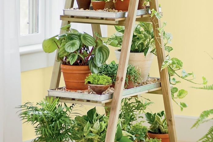 Diy Indoor Herb Garden Out Of Old Stepladder Indoor 400 x 300