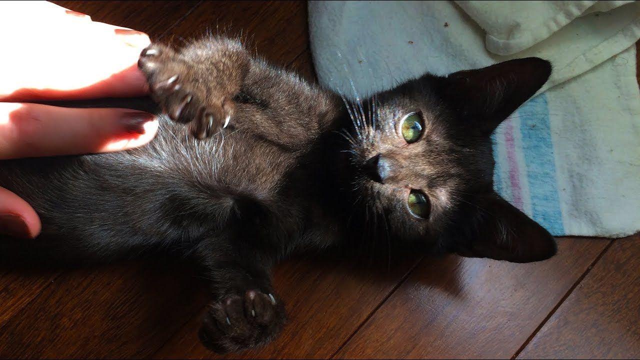 Black Kitten Sitting On My Shoulder Having A Bath Youtube Black Kitten Black And White Kittens Kitten